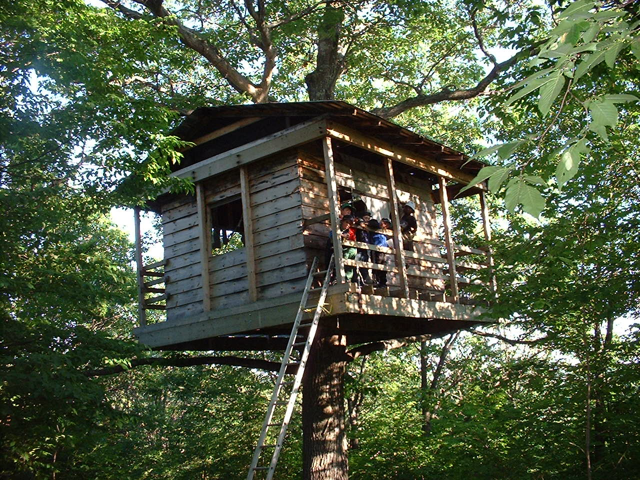 Giant tree house medeba for Building a house in ontario